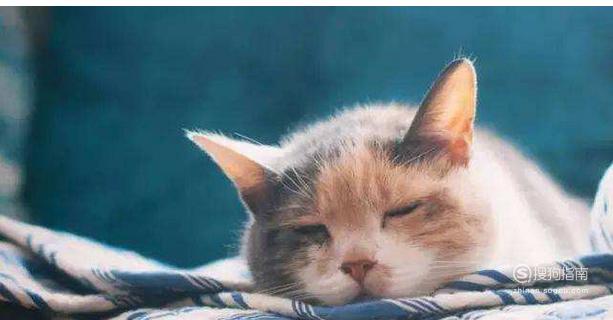 猫咪呕吐的治疗办法(呕吐的原因)