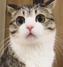 中华田园猫有哪些缺点?
